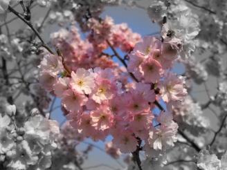 Pic 12 Blossom